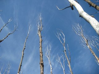 Frequent droughts can drive extensive tree loss