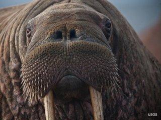 25 species denied endangered status