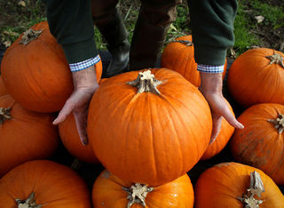 Giant Pumpkin Fest returns to Old Colorado City