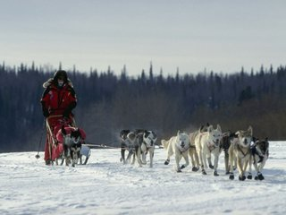 Iditarod dog doping prompts new rules for race