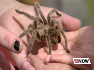 Safe exposure to spiders helps fight fear