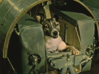 Laika the dog first entered orbit 60 years ago