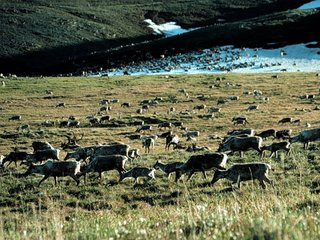 US may OK drilling in National Wildlife Refuge