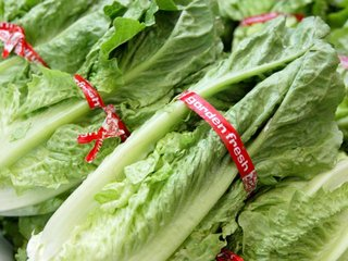 Don't blame romaine for E. coli outbreak yet
