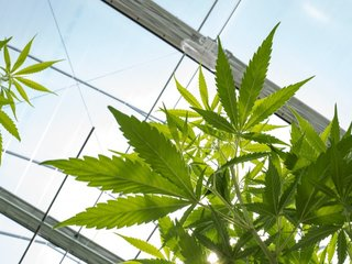 Vermont House approves legalizing marijuana