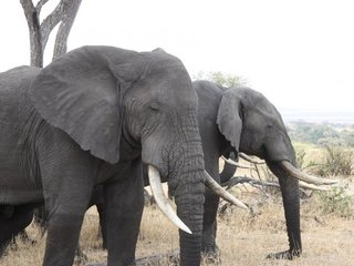 Most African protected areas face war conflicts