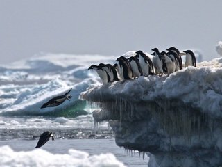Scientists uncover penguin 'supercolony'