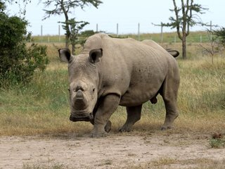 The World's Last Male Northern White Rhino Dies
