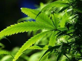 Australia party wants full cannabis legalization