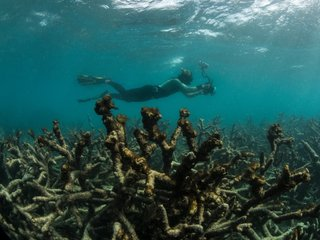 Third of Great Barrier Reef coral died in 2016