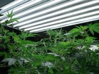 It takes lots of electricity to grow marijuana
