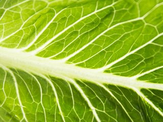 CDC expands E. coli warning for romaine lettuce