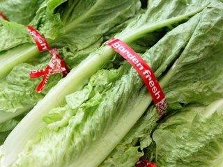 Romaine lettuce-linked E. coli outbreak spreads