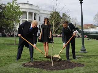 Why the tree Macron gave Trump disappeared