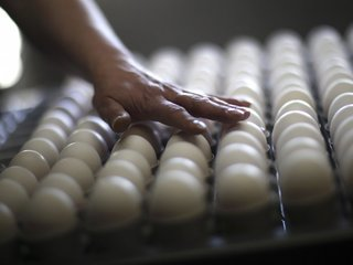 FDA: Salmonella-linked farm had rodent problem