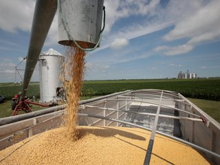Farmers could bear brunt of US-China trade war