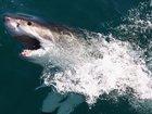 Senators learn how sharks might help cure cancer