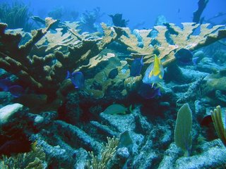 Human activity affects almost all of the oceans