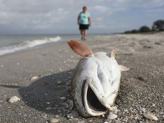 Florida's red tide reportedly making some sick