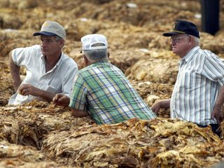 North Carolina farmers race to harvest crops