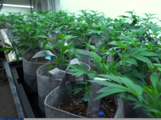 Poll: Support for legalizing marijuana grows